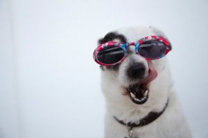 Rejected by the Washington Post 2 adorable-dog-in-sunglasses-compressor